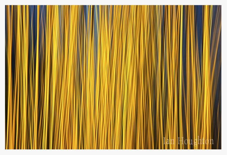 IMG_0859_Yellow